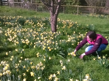 Tammy with daffodils (2)